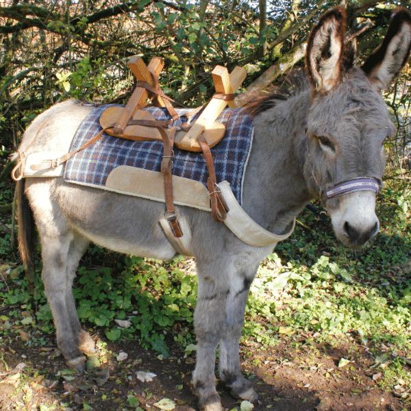 Bobby à la Combe aux ânes
