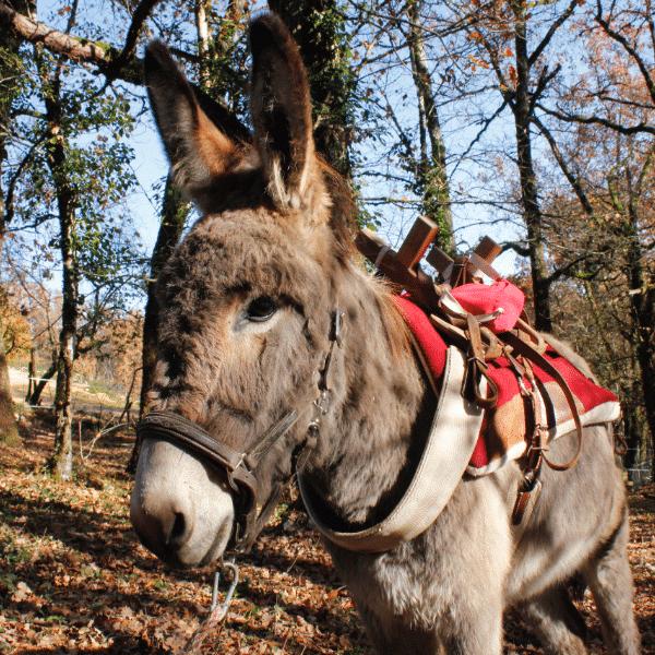 Charly à la Combe aux ânes