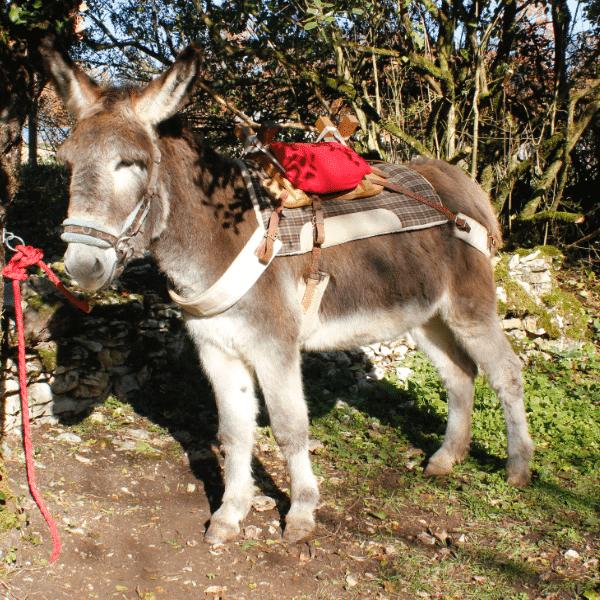 Nougat à la Combe aux ânes