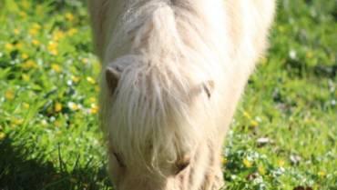 Jersey, notre petit poney découvre sa nouvelle ferme pédagogique dans les Côtes d'Armor !